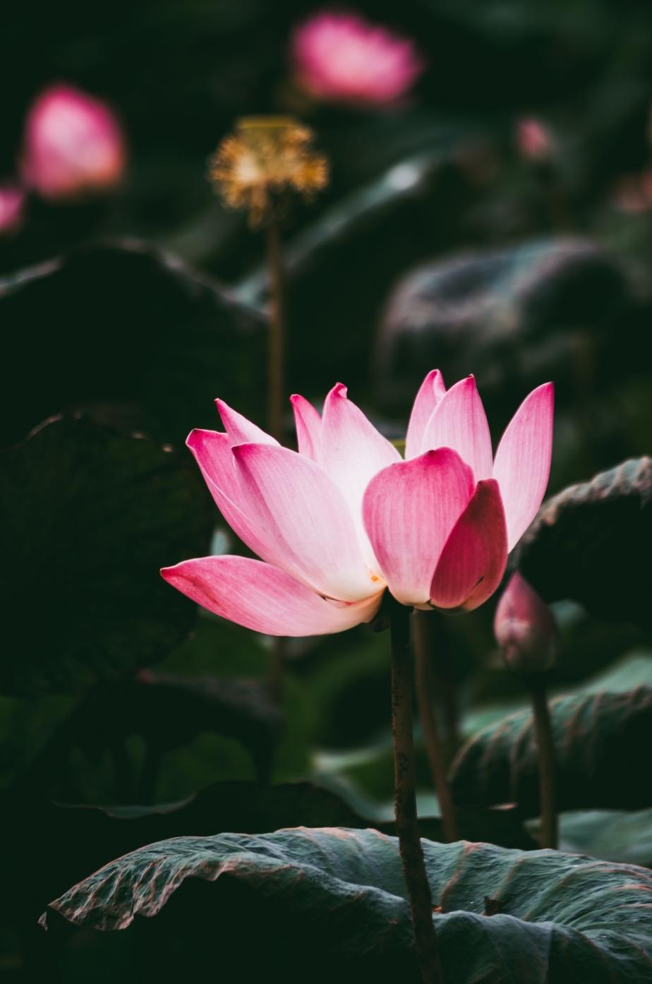 Video Poem: Sensual Yoga Music, by MarkTulin