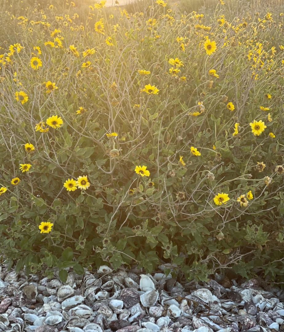 Video Poem: Field of Daisies, by MarkTulin